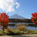 富士と紅葉3