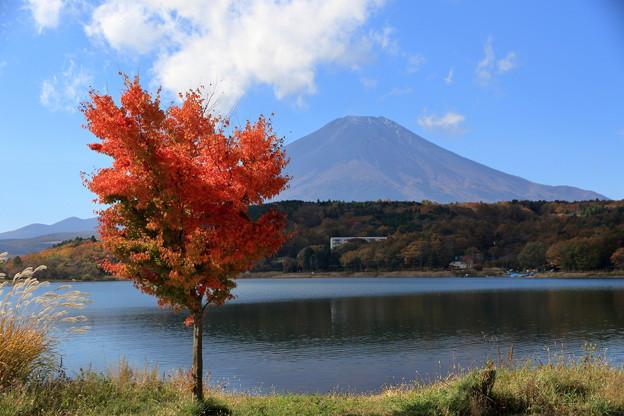 富士と紅葉4