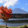 写真: 富士と紅葉4