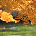 写真: 美しい紅葉と川
