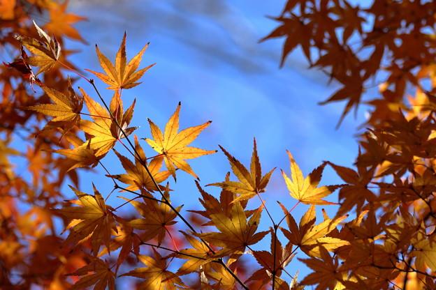 青空と黄葉