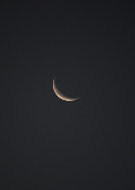 Paper Moon (C-Moon)
