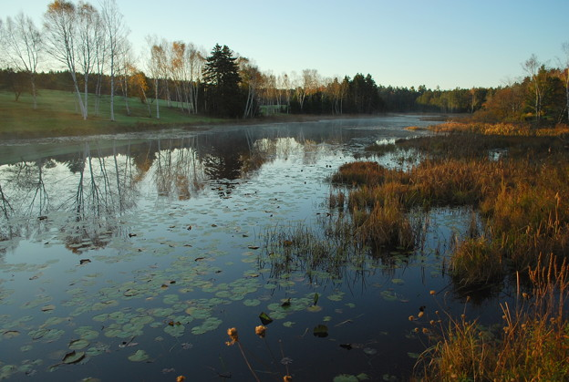 Photos: The Mist and the Water Lilies