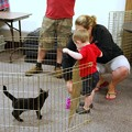 Photos: Juno in Play Pen 7-27-14