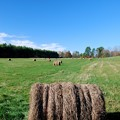 The Bales 10-25-14