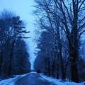 写真: The Colors of Winter 12-13-14