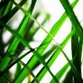 写真: Green Plaids 2-1-15