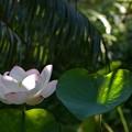写真: Lotus IX 8-6-17