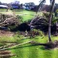 Photos: 裏庭の被害