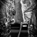 写真: Kitty 10-1-17
