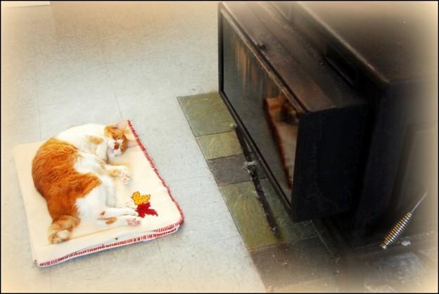 写真: 「第127回モノコン」薪ストーブは骨まで温まるにゃ。~Billy最後のクリスマス・イヴ