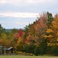 写真: Autumn 10-16-17