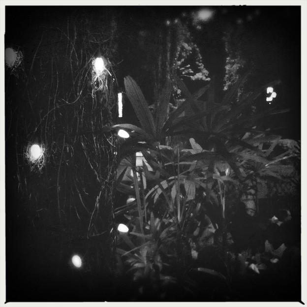 Photos: The Night 12-3-17