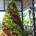 写真: Botanical Garden Christmas Tree 2017