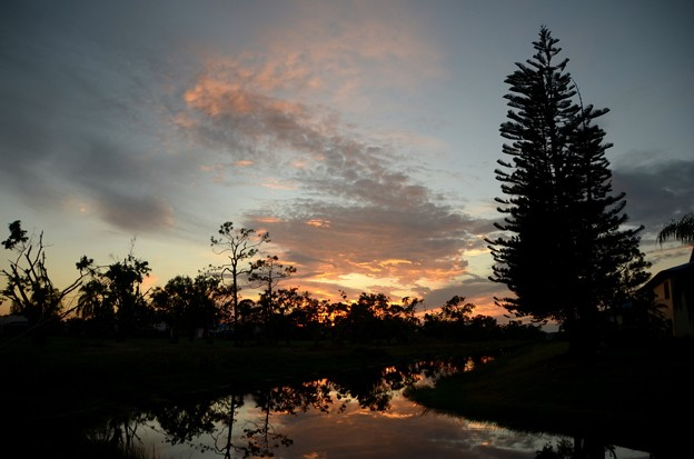 Norfolk Island Pine Trees and the Clouds 11-26-17