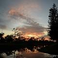 写真: Norfolk Island Pine Trees and the Clouds 11-26-17