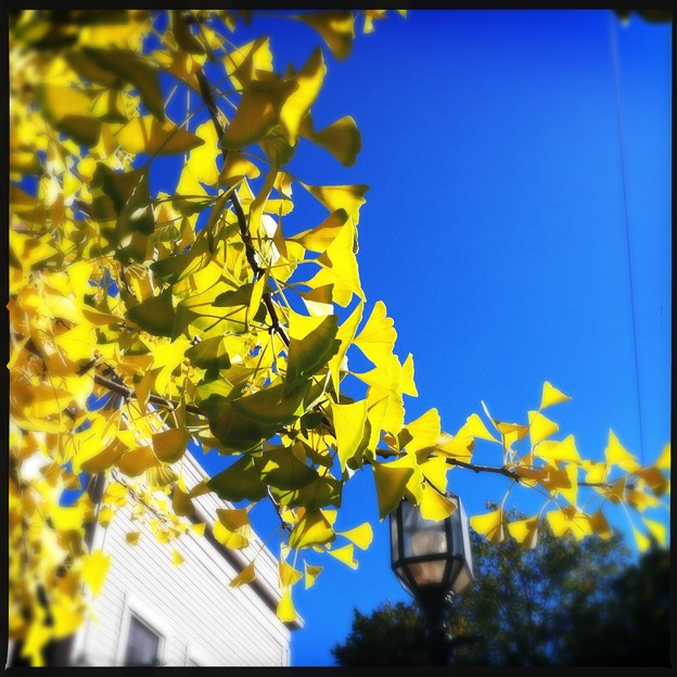 Autumn in Maine Street 10-18-17