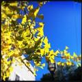 写真: Autumn in Maine Street 10-18-17