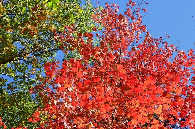 写真: Red and Green 10-20-17
