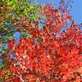 Red and Green 10-20-17