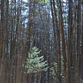 North Loop Trail 3-20-10