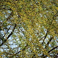 Photos: Willow Flowers