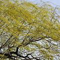 Photos: Windy Willow
