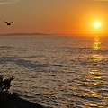 A Seagull and the Rising Sun