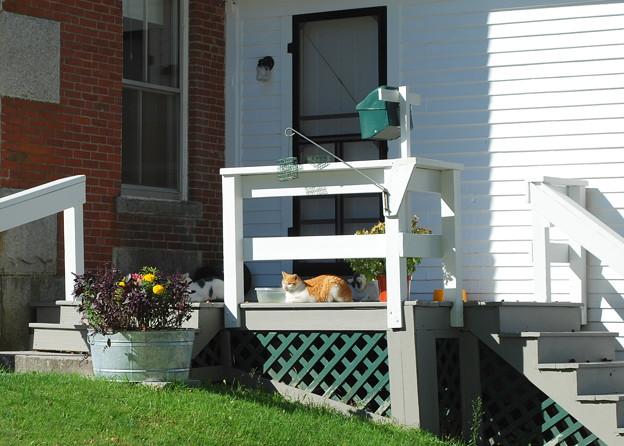 Photos: Shaker Kitties