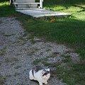 Shaker Kitty