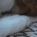 写真: His Toes