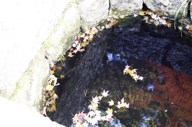 井山宝福寺の紅葉
