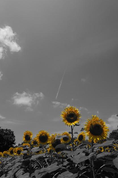 写真: おっ暑い夏の光が写っているぞ