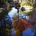 池の中の秋を撮ってみた
