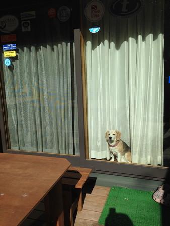 たった10分だけのお留守番なのに、ずーっと窓で待つうみさん。ちょっと顔がブー垂れてます(もぅたった10分なんだよぉー)