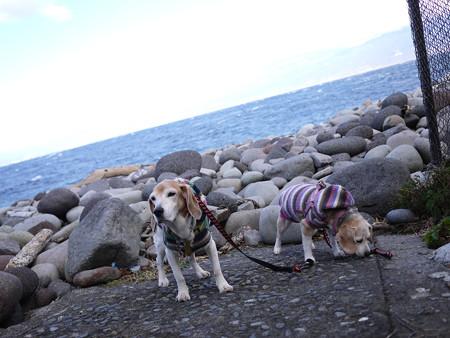 恒例の荒れた海、富士山(見えない…)とマリうみ記念撮影!(こっちむけーーーっ!)