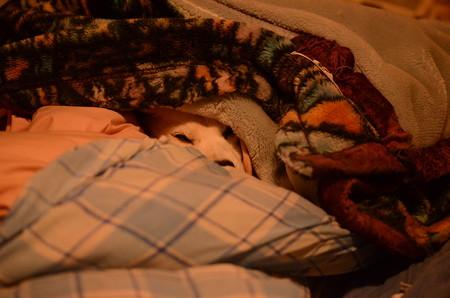 お姫様はこうして自分で布団の中にしっかり入って包まって寝ます