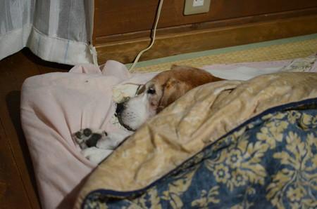 こうしておかーさんがお布団かけてあげます。おやすみー