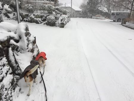 シニアなのに雪喜んでました