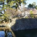 Photos: 小田原城12