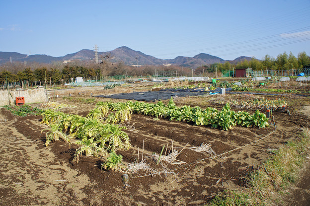 秦野市東田原ふれあい農園13