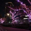 目黒川ライトアップ1