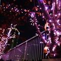 目黒川ライトアップ2