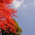 房総の紅葉