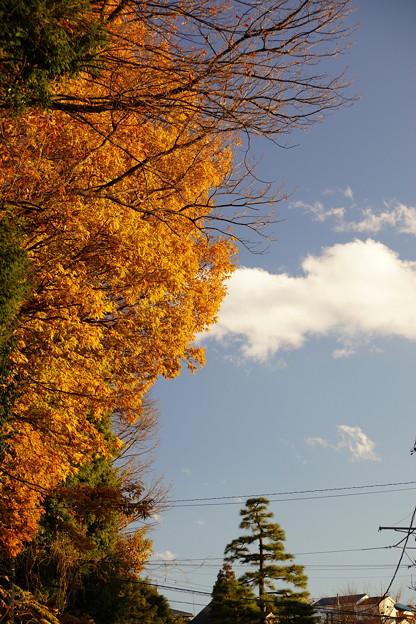 山神社の紅葉