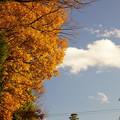 Photos: 山神社の紅葉