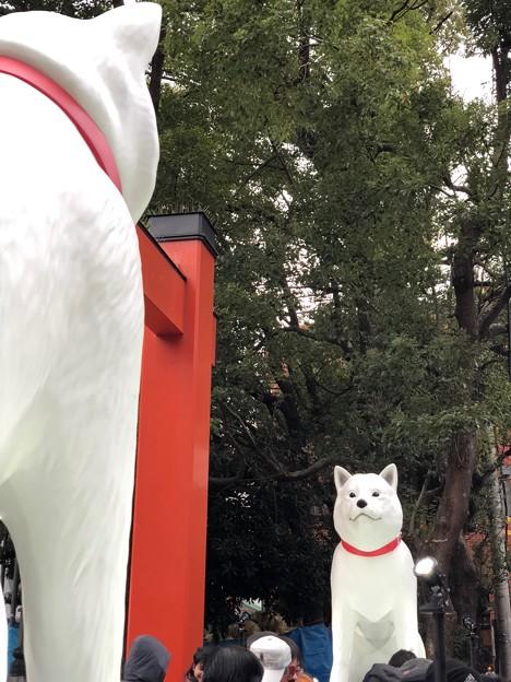 大須観音のお父さん犬