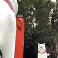 Photos: 大須観音のお父さん犬