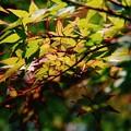 Photos: 初秋の小淵沢