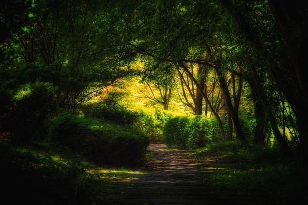 Photos: 森の小径